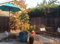 Mountain View Landscaping_16